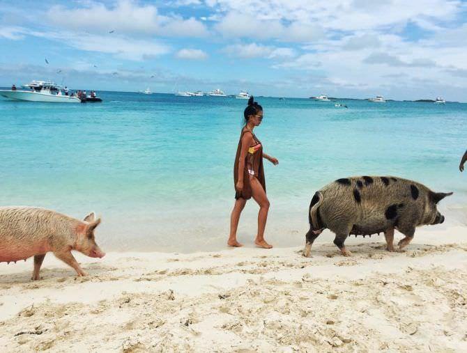 Яо Синтун фото на пляже со свинками